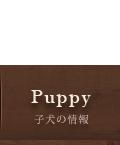 子犬の情報